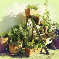 Germany, Baden-Wuerttemberg, Stuttgart, Garden, potted plants, pots, various herbs, gardening