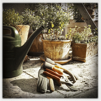 Germany, Baden-Wuerttemberg, Stuttgart, Garden, potted plants, watering, pruning shears, gloves, various herbs, gardening