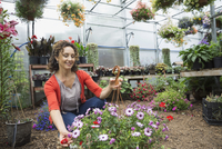 Woman examining hanging basket in plant nursery greenhouse