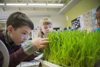 Elementary students examining sprouts in laboratory 11096005415| 写真素材・ストックフォト・画像・イラスト素材|アマナイメージズ