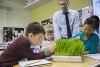 Teacher and elementary students examining sprouts in laboratory 11096005416| 写真素材・ストックフォト・画像・イラスト素材|アマナイメージズ