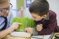 Teacher and elementary student examining sprouts in laboratory 11096005417| 写真素材・ストックフォト・画像・イラスト素材|アマナイメージズ