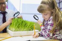 Teacher and elementary student examining sprouts in laboratory 11096005418| 写真素材・ストックフォト・画像・イラスト素材|アマナイメージズ