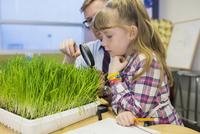 Teacher and elementary student examining sprouts in laboratory 11096005419| 写真素材・ストックフォト・画像・イラスト素材|アマナイメージズ