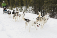 Family dogsledding in snow 11096007094| 写真素材・ストックフォト・画像・イラスト素材|アマナイメージズ