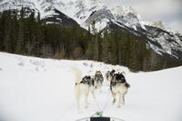 Dogsled on the move below snowy mountains 11096007252| 写真素材・ストックフォト・画像・イラスト素材|アマナイメージズ