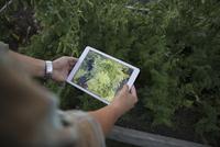 Man with digital tablet comparing plants in garden 11096012407| 写真素材・ストックフォト・画像・イラスト素材|アマナイメージズ