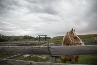 Horse looking away behind pasture fence
