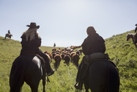 Female ranchers on horseback herding cattle sunny field