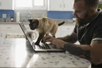 Cat crawling on man's laptop in kitchen