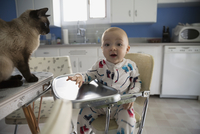 Portrait enthusiastic baby boy high chair by cat 11096013678| 写真素材・ストックフォト・画像・イラスト素材|アマナイメージズ