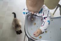 Baby boy high chair dropping food to cat 11096013683| 写真素材・ストックフォト・画像・イラスト素材|アマナイメージズ