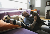 Dog sleeping by man petting cat living room