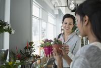 Florist showing customer cactus flower pot flower shop 11096018042| 写真素材・ストックフォト・画像・イラスト素材|アマナイメージズ