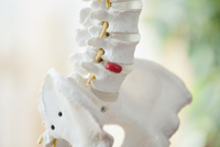 closeup view of anatomical model of spine