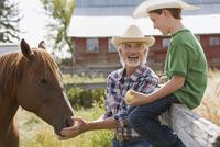 Grandfather and grandson feeding horse on farm. 11096025650| 写真素材・ストックフォト・画像・イラスト素材|アマナイメージズ