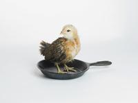 Chicken standing in pan