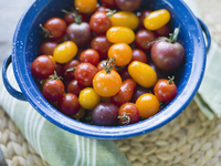 Washed cherry Tomatoes in colander
