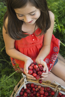 High angle view of girl holding fresh crab apples