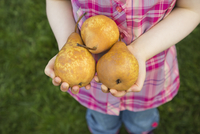 Girl holding fresh pears in cupped hands