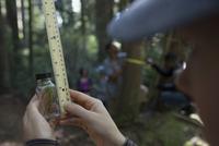 Volunteer with ruler measuring tree specimen in bottle in woods