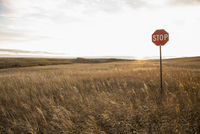 Stop sign on field