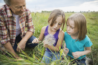 Grandfather and granddaughters looking at seeds of a Tragopogon plant