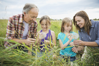 Grandparents and granddaughters looking at seeds of Tragopogon plant