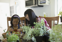 Mother and daughter painting flowerpots at kitchen table 11096042119| 写真素材・ストックフォト・画像・イラスト素材|アマナイメージズ