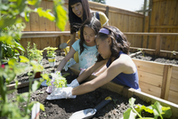 Mother and daughter planting vegetables in sunny garden