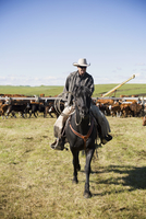 Cattle rancher on horseback