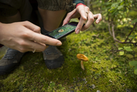 Close up female hiker with camera phone photographing mushroom in moss