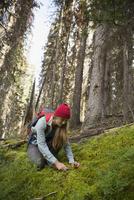 Female hiker cutting mushroom in woods 11096044641| 写真素材・ストックフォト・画像・イラスト素材|アマナイメージズ