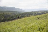 Couple hiking in remote rural field 11096045174| 写真素材・ストックフォト・画像・イラスト素材|アマナイメージズ