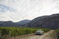 Truck parked in vineyard below mountains