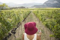 Woman wearing red hat wine tasting in vineyard 11096046322| 写真素材・ストックフォト・画像・イラスト素材|アマナイメージズ