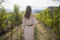 Woman wearing dress wine tasting in sunny vineyard 11096046323| 写真素材・ストックフォト・画像・イラスト素材|アマナイメージズ