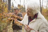 Senior woman examining autumn leaves on branch in park