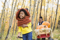 Laughing girl sisters pulling wagon with autumn pumpkins in woods