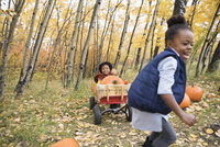 Enthusiastic girl pulling sister and autumn pumpkins in woods 11096046688| 写真素材・ストックフォト・画像・イラスト素材|アマナイメージズ