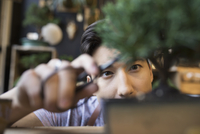 Close up focused male shop owner trimming small bonsai plant with scissors
