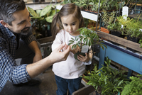 Father and daughter shopping browsing plant in shop 11096047572| 写真素材・ストックフォト・画像・イラスト素材|アマナイメージズ