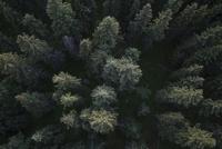 Overhead view tall green forest treetops 11096048783| 写真素材・ストックフォト・画像・イラスト素材|アマナイメージズ
