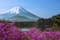 Lake Shojiko - Springtime