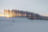 Sunset over snow covered bare trees, Biei, Hokkaido, Japan