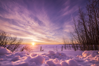 Field in winter at sunset, Alberta, Canada