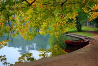 Boat on shores under autumn tree, Vienna, Laxenburg, Austria