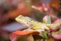 Chameleon (Chamaeleonidae) sitting on leaf