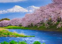 Fuji and Sakura at the river