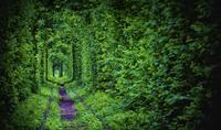 Tunnel of Love 11098010532| 写真素材・ストックフォト・画像・イラスト素材|アマナイメージズ